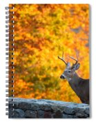 Buck In The Fall 06 Spiral Notebook