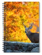 Buck In The Fall 07 Spiral Notebook