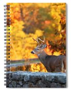 Buck In The Fall 09 Spiral Notebook