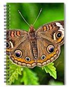 Buckeye Butterfly Spiral Notebook