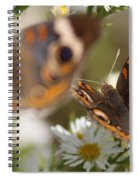 Buckeye With Eyes Spiral Notebook
