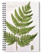 Buckler Fern Spiral Notebook