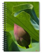 Bud Watched Over Dl050 Spiral Notebook