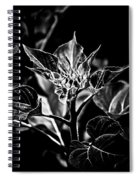 Budding Sunflower Spiral Notebook