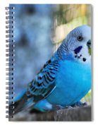 Budgerigar - Parakeet Spiral Notebook