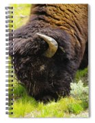 Buffalo Grazing Spiral Notebook