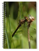 Bug Eyed Dragon Fly Spiral Notebook