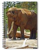 Bull Elephant Spiral Notebook