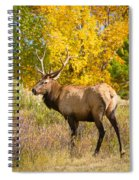Bull Elk Autum Portrait Spiral Notebook