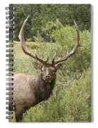 Bull Elk Eyes Spiral Notebook