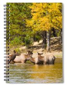 Bull Elk Watching Over Herd 2 Spiral Notebook