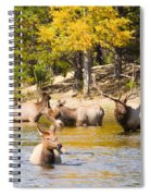 Bull Elk Watching Over Herd 4 Spiral Notebook