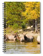 Bull Elk Watching Over Herd 5 Spiral Notebook