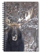 Bull Moose In Winter Spiral Notebook