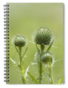 Bull Or Spear Thistle Buds- Cirsium Vulgare Spiral Notebook