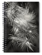 Bull Thistle Monochrome Spiral Notebook