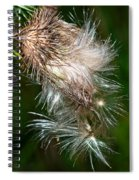Bull Thistle Spiral Notebook