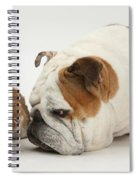 Bulldog And Lionhead-cross Rabbit Spiral Notebook