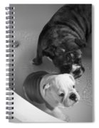 Bulldog Bath Time Spiral Notebook