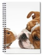 Bulldog Pup Face-to-face With Guinea Pig Spiral Notebook
