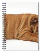 Bulldog Puppy Spiral Notebook