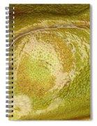 Bullfrog Ear Spiral Notebook