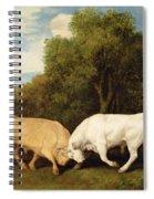 Bulls Fighting Spiral Notebook