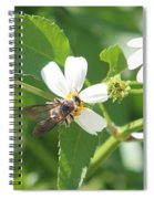 Bumble Bee 1 Spiral Notebook