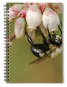 Bumble Bee And Blueberry Blossoms Spiral Notebook