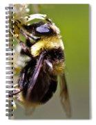 Bumble Eye Spiral Notebook