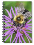 Bumblebee On A Purple Flower Spiral Notebook