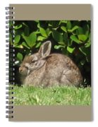 Bunny Spiral Notebook