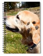 Burdock Burs Spiral Notebook