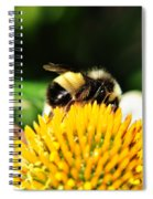 Busy Bee Collecting On Echinacea Pow Wow Spiral Notebook