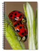 Busy Bugs Spiral Notebook