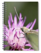 Butterfly - Plain And Simple Spiral Notebook