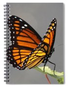 Butterfly - Sitting On The Green Spiral Notebook