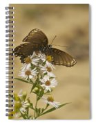 Butterfly 3322 Spiral Notebook