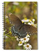 Butterfly 3325 Spiral Notebook
