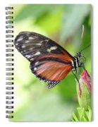 Butterfly At Rest Spiral Notebook