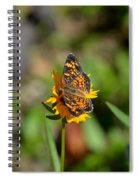 Butterfly Gold Spiral Notebook