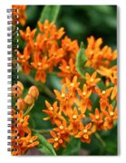 Butterfly Milkweed Spiral Notebook