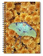Butterfly On Flowers Spiral Notebook