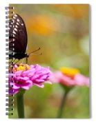 Butterfly On Pink Zinnia Spiral Notebook