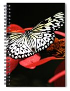 Butterfly On Red Spiral Notebook