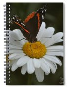 Butterfly On Shasta Daisy Spiral Notebook