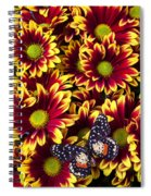 Butterfly On Yellow Red Daises  Spiral Notebook