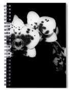 Butterfly Orchid In The Shadows Spiral Notebook