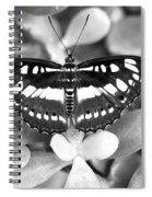 Butterfly Study #0061 Spiral Notebook