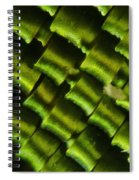 Butterfly Wing Scales Spiral Notebook